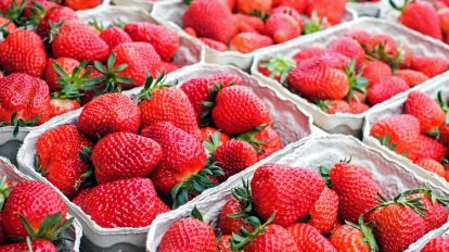 baskets of fresh strawberries laid out on a table